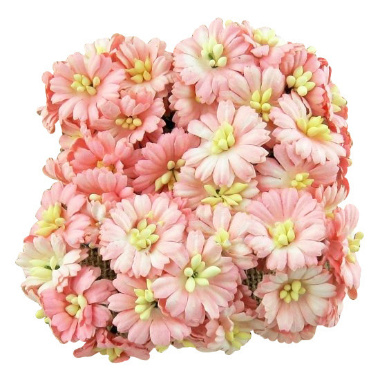 50 BABY PINK COSMOS DAISY STEM FLOWERS