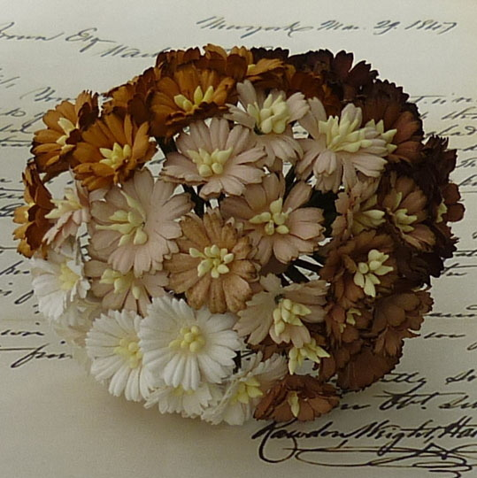 50 MIXED BROWN/WHITE COSMOS DAISY STEM FLOWERS
