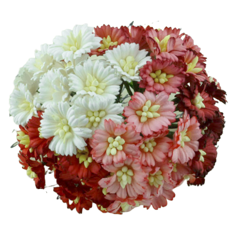 50 MIXED RED/WHITE COSMOS DAISY STEM FLOWERS