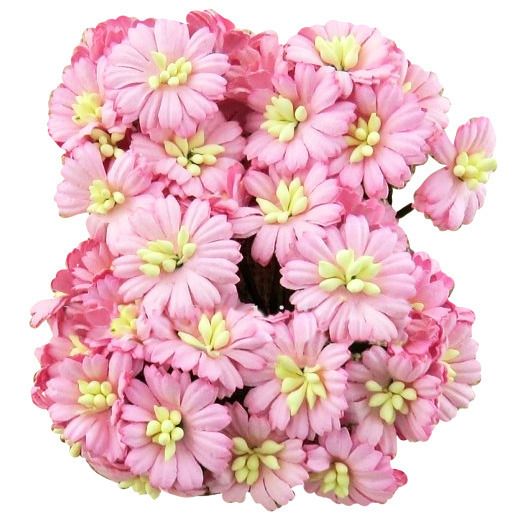 50 PINK COSMOS DAISY STEM FLOWERS