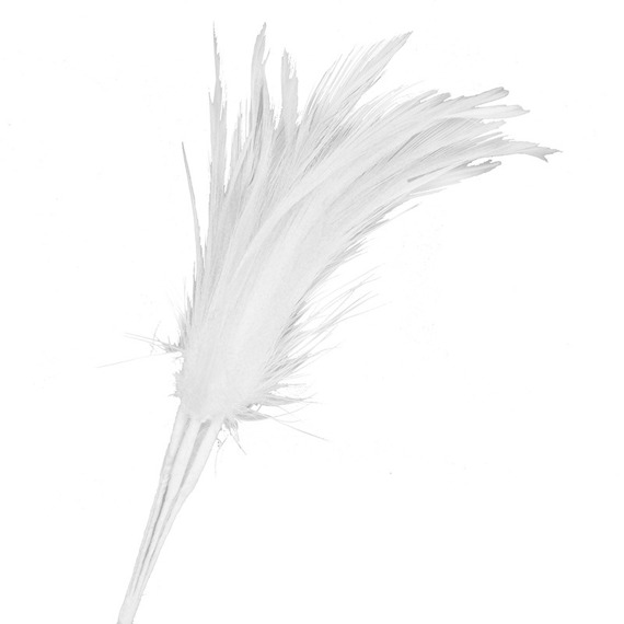 6 FEATHERS FEATHERS